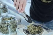 Cannabis being weighed. Photo: Add Weed on Unsplash
